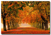 "Autumn Fallen Leaves Forest Path Nature Art Silk Poster Picture 13x20 24x36"" 003"