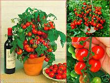 "40 Seeds Upright ""Tiny Tim"" Tomato Dwarf Bonsai Compact Heavy Yielder Plant seed"