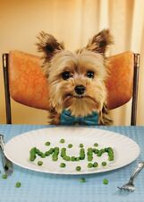 Avanti Mother's Day Cute Dog Greeting Card Funny Range Cards