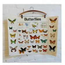 Vintage 1980s Educational Butterfly Laminated Poster Chart Diagram
