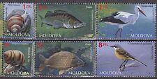 MOLDOVA 2014 **MNH SC#  Fauna of Moldova - The Snails, The Birds, The Fishs