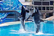Seaworld San Diego 3900+ Photo dvd, + bonus marineland Shamu photos cd Sea World