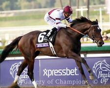 """Royal Delta 2012 Breeders' Cup Ladies Classic Photo #2   8"""" x 10"""""""