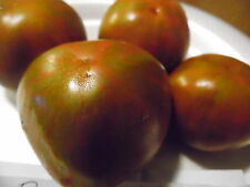 Black Zebra Tomato Seeds! Great tasting tomato! Comb. S/H See our store!