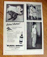 1950 Black White Scottish Scotty Terrier Westie Ad Newspaper