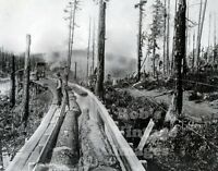 Pine Logging Logs floating in  Flume Photo Pacific Northwest