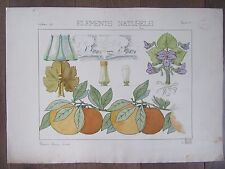 DESSIN ORIGINAL AQUARELLE ARTS DECORATIFS 1898 BEAU  MOTIF ORANGES FEUILLE FLEUR
