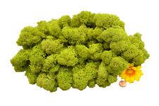Muwse Islandmoos Köpfe V 4-12cm 100g Frühlingsgrün handgereinigt Moos Deko