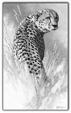 Cheetah print picture wildlife wall art animal b/w poster cat pencil drawing