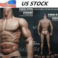 """12"""" ZC Toys  Male Muscular Body Model  16 Scale For Hot Toys Head in US Stock"""