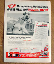 1951 Gaines Dog Food Ad Wired Fox Terrier Dog