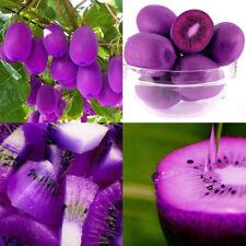 100pcs / bag Purple Kiwi Seeds leche, delicioso sabor a fruta fresca semilla