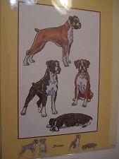 CARTE + ENVELOPPE - chien   BOXER
