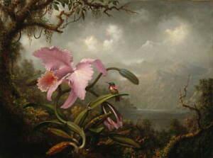 Martin Johnson Heade Orchid and Hummingbird Poster Giclee Canvas Print