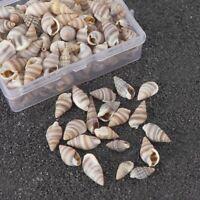1Box Natural Shells Mini Conch Corn Screw DIY Aquarium Landscape Seashells Craft