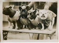 Londres, Exposition canine au Cristal Palace  Vintage silver Print Tirage arge