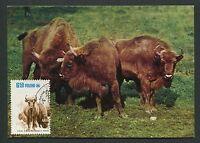POLEN MK FAUNA BISON WISENT MAXIMUMKARTE CARTE MAXIMUM CARD MC CM d5870