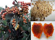 50 semi Opuntia Ficus Indica Tuna Fico d'India giallo-arancio Sulfarina seeds