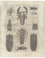 1798 Microscopic Objects INSECTS body head under microscope American plate print