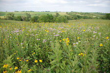 Tallgrass Prairie Seed Mix - 1 Acre (10lbs)