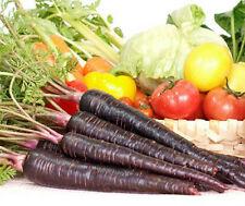 Heirloom Organic 60 Seeds Purple Haze Black Carrot Carrots Unusual Vegetable