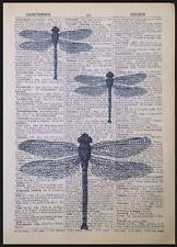 vintage libellule insecte imprimé original antique Dictionary PAGE Art Mural