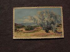 """""""SMOKE TREES AND VERBENAS"""" - PALM SPRINGS, CALIFORNIA - VINTAGE POSTCARD"""