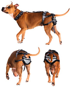 Chastity Belt for Dogs - Pet Anti-Breeding System PABS, Humane Birth Control