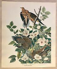 Beautiful Vintage Bird Birding Aviary Art Print Ornithologist Pigeon Turtle Dove