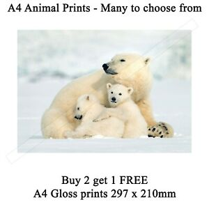 Animal Prints Wildlife images Picture Print ONLY Wall Art - Many to choose from