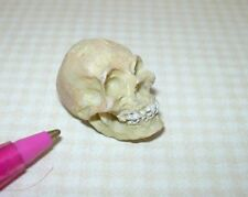 "Miniature Resin Skull w/Teeth Halloween/Medical: DOLLHOUSE 1"" x 3/4"" x 5/8"" 1:12"
