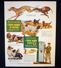 1950 Ethyl Gasoline Gas Station Pump Ad Identify Breeds Of Dogs
