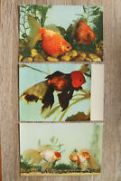 China 8 AK Goldfish Goldfisch 1950-1970s Violet Red-Head Dragon-eyes Melanges ++