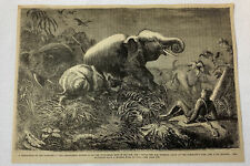 1877 magazine engraving ~ Rhinoceros On A Rampage Attacking Elephant