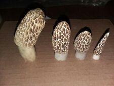4 morel mushroom decoy carvings;antlers sheds:Larry Kindell:molly moochers;bones