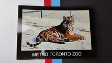 Metro Toronto Zoo 1983 Siberian Tiger Java Sumatra Canada Postcard post card