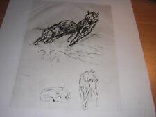 1948.eau forte Odette Denis loup.animaux