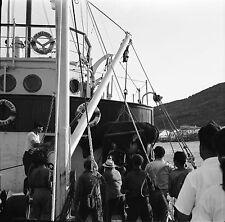 ANDROS c. 1950 - Port Chargement Vache - Négatif 6 x 6 - GRE 56
