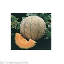 100 Delicious 51 Brand Heirloom cantaloupe seeds. SAME DAY SHIPPING