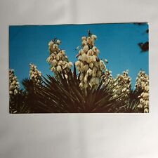 Yucca Plant Sanibel Captiva Islands Florida Unposted Postcard
