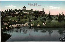 12764/ Foto AK, Beuthen O.S., Promenade mit Hügel, ca. 1920