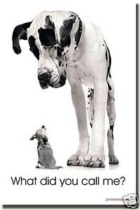 What Did You Call Me? Dog Animal Funny Print NEW POSTER