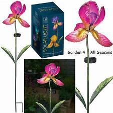 IRIS Fucsia Fiore Solare Luce Giardino Paletto Creekwood Regal Art & Gift Boxed