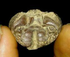 Amazing Arthropod, Crustacean, Crab Fossil From Java, Indonesia, 29Mm