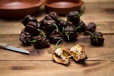 10+graines Trinidad Moruga Scorpion Chocolate , hot Chili pepper fresh seeds