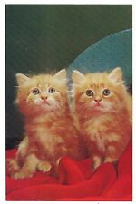 Anticipation Pair of Kittens Cats Orange White Tiger Striped Tabby Postcard