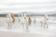 Giant wallpaper 368x254cm White Horses for childrens room wall mural white decor