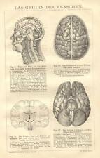1898= CERVELLO = MEDICINA = Stampa Antica = Old Engraving