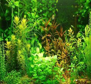 Aquarium grass fish decor aquatic plants mix included 15 species 1000 seeds