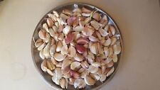 Garlic Seeds 50 cloves MIXED hard and soft neck Garlic cloves Corms, Seeds